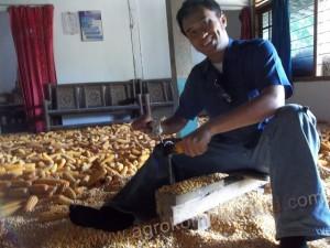 Teknologi sederhana untuk membantu panen jagung pipil - Alat pemipil jagung