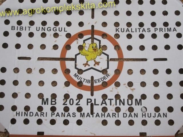 budidaya ayam broiler, doc ayam broiler jenis platimum MD 202