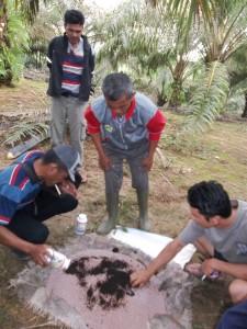 Aplikasi pemupukan kelapa sawit, Mosa Gold dicampur dengan NPK