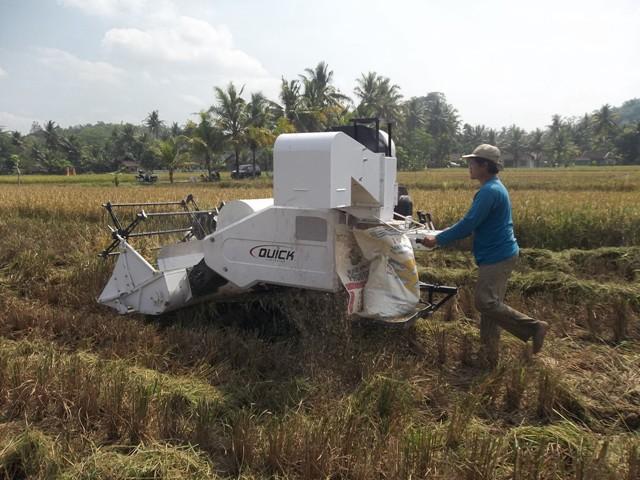 Panen padi dengan mesin pemanen modern