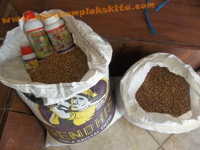 Panen Hanjeli dengan pupuk MMC siap untuk diselep (di penggilingan beras)