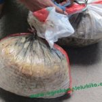 Tips Supaya Ternak Kambing Doyan Pakan Fermentasi