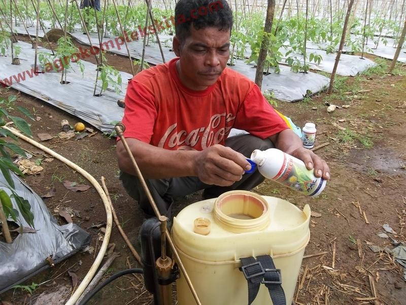 Penyemprotan dengan pupuk AGRITECH 1 tutup untuk 1 tangki isi 14 liter
