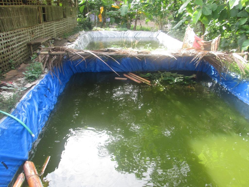 Cara Hebat dan Mudah Mengatasi Air Kolam Berbau Busuk