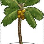 Cara merawat tanaman kelapa agar meningkatkan hasil
