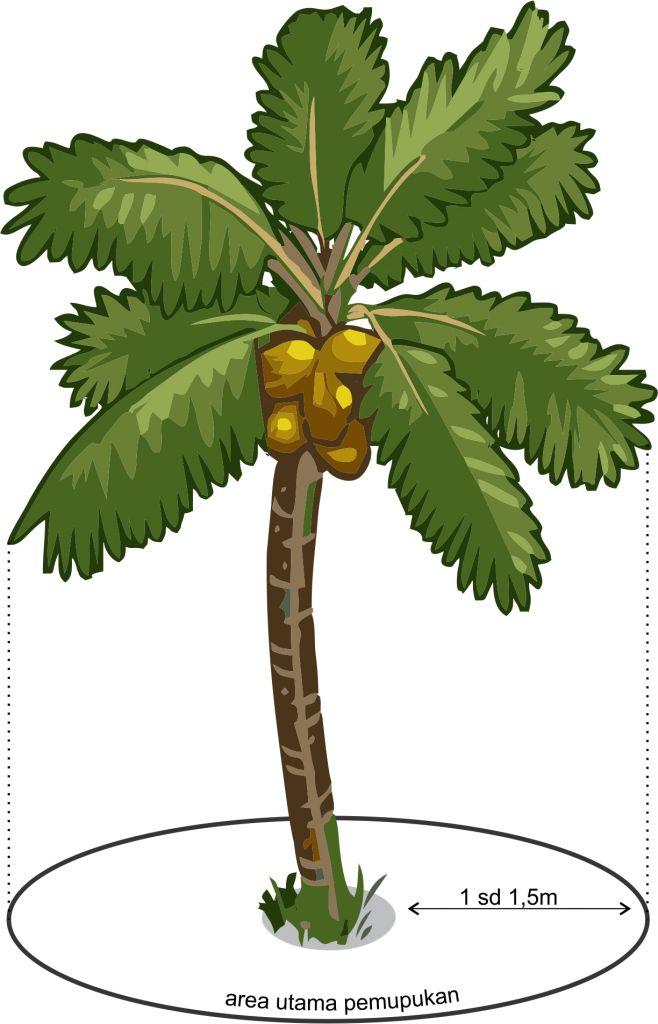 Cara pemupukan untuk tanaman kelapa