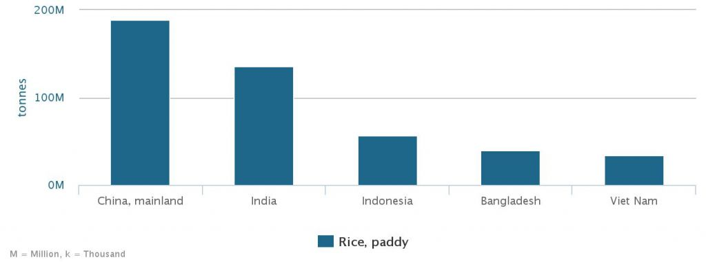 Indonesia menjadi penghasil padi terbesar nomer 3 sedunia - Sumber FAO