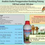 Unggul mengembangkan ternak kambing pedaging dengan pakan fermentasi…..