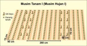 Jarak tanam singkong model doble row dg kacang tanah MT 1