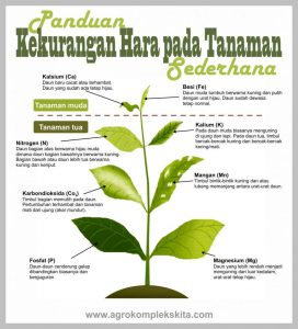 ciri-ciri tanaman kekurangan pupuk