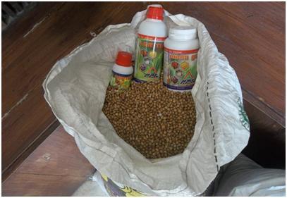 Panen Hanjeli organik dengan produk MMC di Magelang
