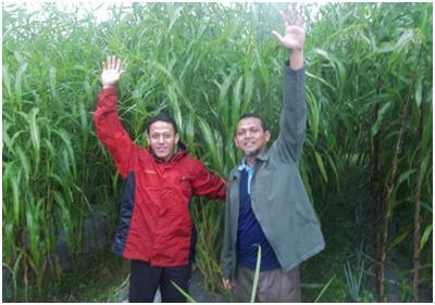 (Kiri) Baron Sani Petani Hanjeli– Magelang. Tinggi tanaman bisa sampai 2 meter.