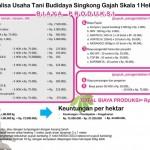 Analisa Usaha Budidaya Singkong Gajah