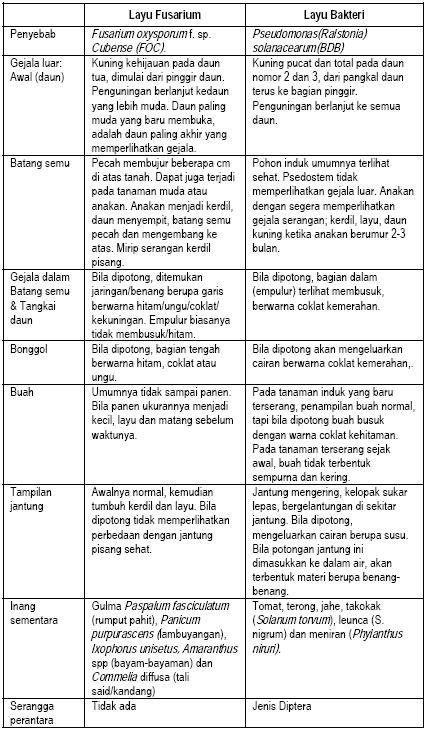 Tabel perbedaan penyakit layu fusarium dengan layu bakteri pada tanaman pisang