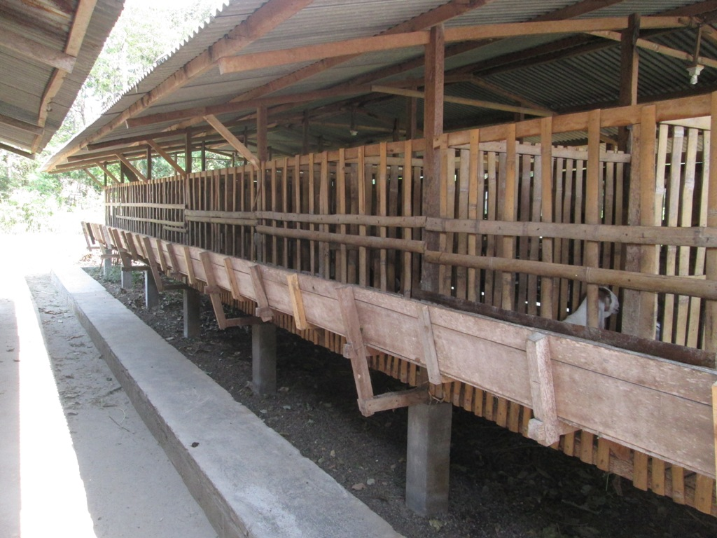 Budidaya Kambing, Bag II : Pembuatan kandang Kambing Yang ...