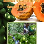 Modul Panduan praktis budidaya pepaya california