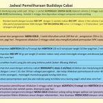 Jadwal Pemeliharaan Budidaya Cabai