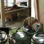 Pengelolaan Limbah Ternak Sapi