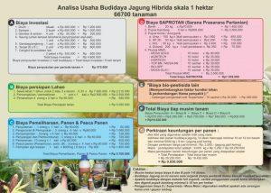 analisa usaha budaya jagung -skala 1 hektar - 1 kali musim tanam