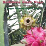 Modul Budidaya Buah Naga – dengan Teknologi MMC