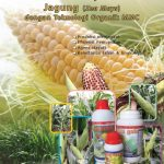 E-book Panduan Budidaya Jagung dengan Teknologi MMC