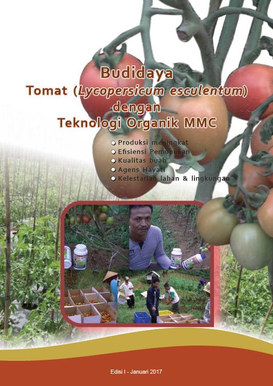 Budidaya tomat organik