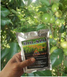 bio-spf pupuk hayati untuk budidaya jambu biji