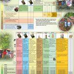 Jadwal Pemupukan, Monitoring dan Penggunaan Agens Hayati untuk Budidaya Cabai