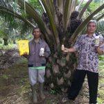 Hama dan Penyakit utama pada tanaman kelapa Sawit