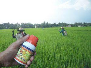 aplikasi penyemprotan ZPT HORTECH pada padi dilakukan di pagi hari 2