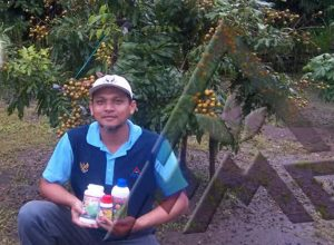 Kelengkeng varietas itoh yang dibudidayakan di lahan pekarangan, lokasi kabupaten Magetan Jawa timur, usia 2 tahun sudah belajar berbuah dengan demikian lebatnya, salah satu keunggulan Produk Organik MMC.