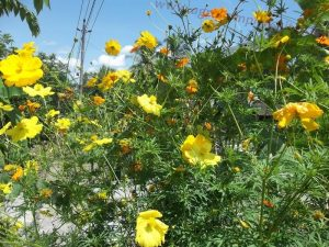 menanam bunga-bungaan di pematang sawah atau tegalan merupakan hal positif bagi mikro ekosistem