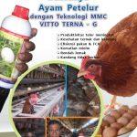 Modul Budidaya Ayam Petelur