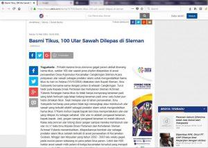 kliping-detikdotcom-selasa 18 mei 2004-Basmi Tikus 100 Ular Sawah Dilepas di Sleman