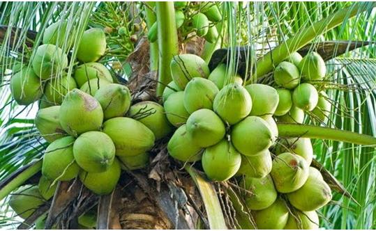 Agrokompleks Kita Pertanian Perkebunan Peternakan Perikanan Part 16