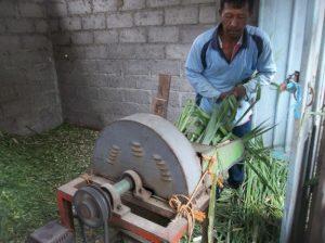Mencacah Rumput dengan mesin merupakan cara yang efisien dan hemat waktu,