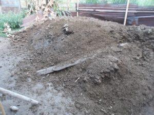 Kotoran Sapi yang Telah dijadikan Pupuk Kandang Yang siap diberikan ke Tanaman