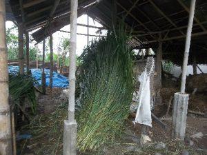 Rumput Gajah yang Baru dipotong, disimpan dalam ruang/Gudang penyimpanan rumput. Keadaan ruang atau gudang Penyimpanan, harus sesuai seperti suhu, kelembapan dan keadaan yang steril dan bersih