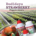 Modul Budidaya Strowbery
