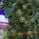 Pedoman Budidaya Tomat