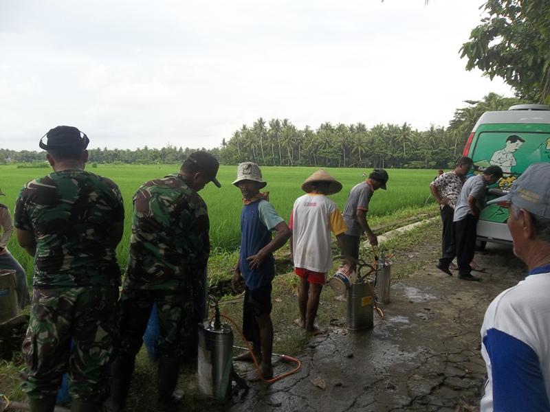 Tentara ikut bahu membahu membantu petani mendukung program ketahanan pangan dengan turun ke lapangan - gerakan massal pengendalian hayati