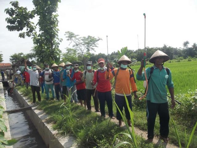 Gerakan massal pengendalian hayati hama wereng dengan TOP BN pada tanaman padi