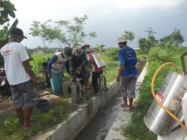 Gerakan massal pengendalian hayati hama wereng dengan TOP BN pada tanaman padiGerakan massal pengendalian hayati hama wereng dengan TOP BN pada tanaman padi