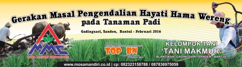 gerakan masal pengendalian wereng dengan agens hayati pada tanaman padi - Bantul - 12 februari 2016
