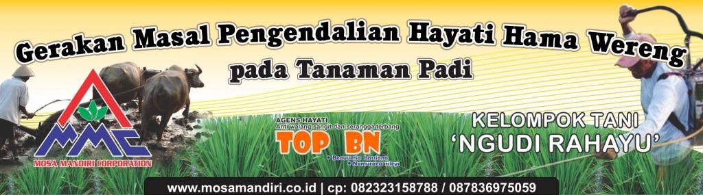 gerakan masal pengendalian wereng dengan agens hayati pada tanaman padi - aman