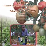 Modul Budidaya Tomat dengan Teknologi MMC