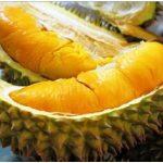 Budidaya Durian, Bag I – Jenis-jenis tanaman durian