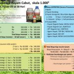 Analisa Usaha Budidaya Bayam Teknologi Organik MMC