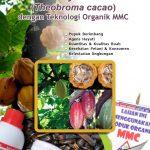 Modul Budidaya Kakao dengan Teknologi MMC
