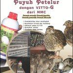 E-book Budidaya Puyuh Petelur